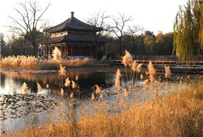 Paisaje de junco en el Parque Yuanmingyuan