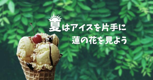 夏はアイスを片手に蓮の花を見よう
