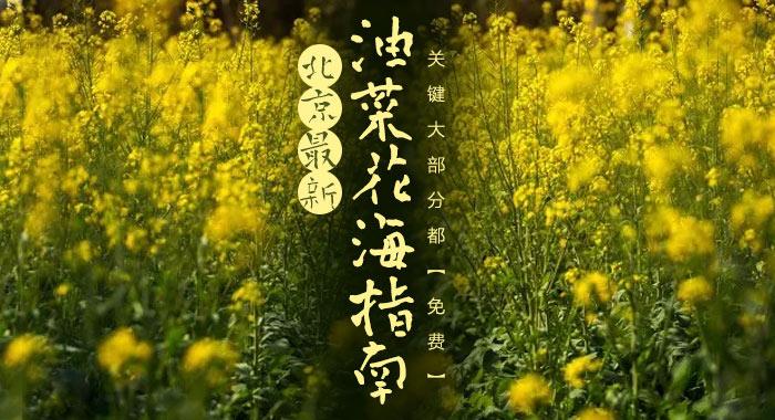 北京最新油菜花海指南在这里!关键大部分都免费!