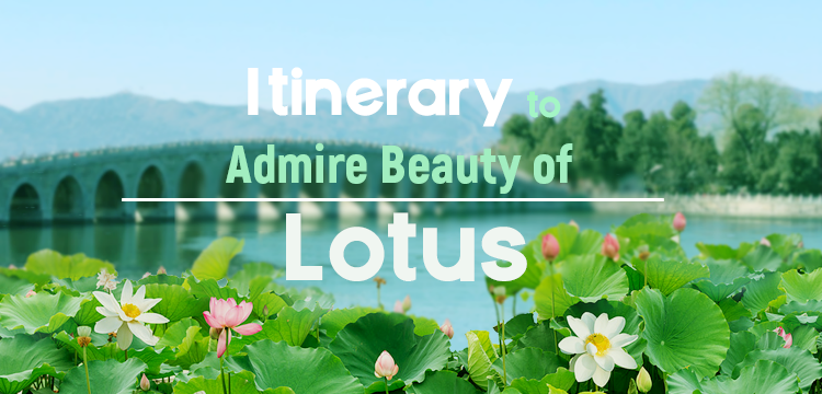 Itinerary to Admire Beauty of Lotus