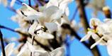 春に聞く、花の歌