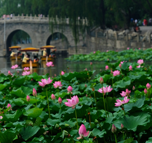 Sublime Summer Scenery in Beihai Park
